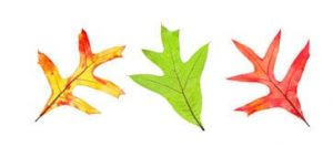 fall-leaf-collection-26316471
