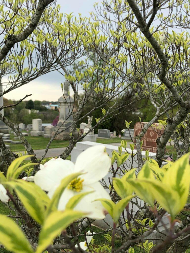 SET Cemetery 6