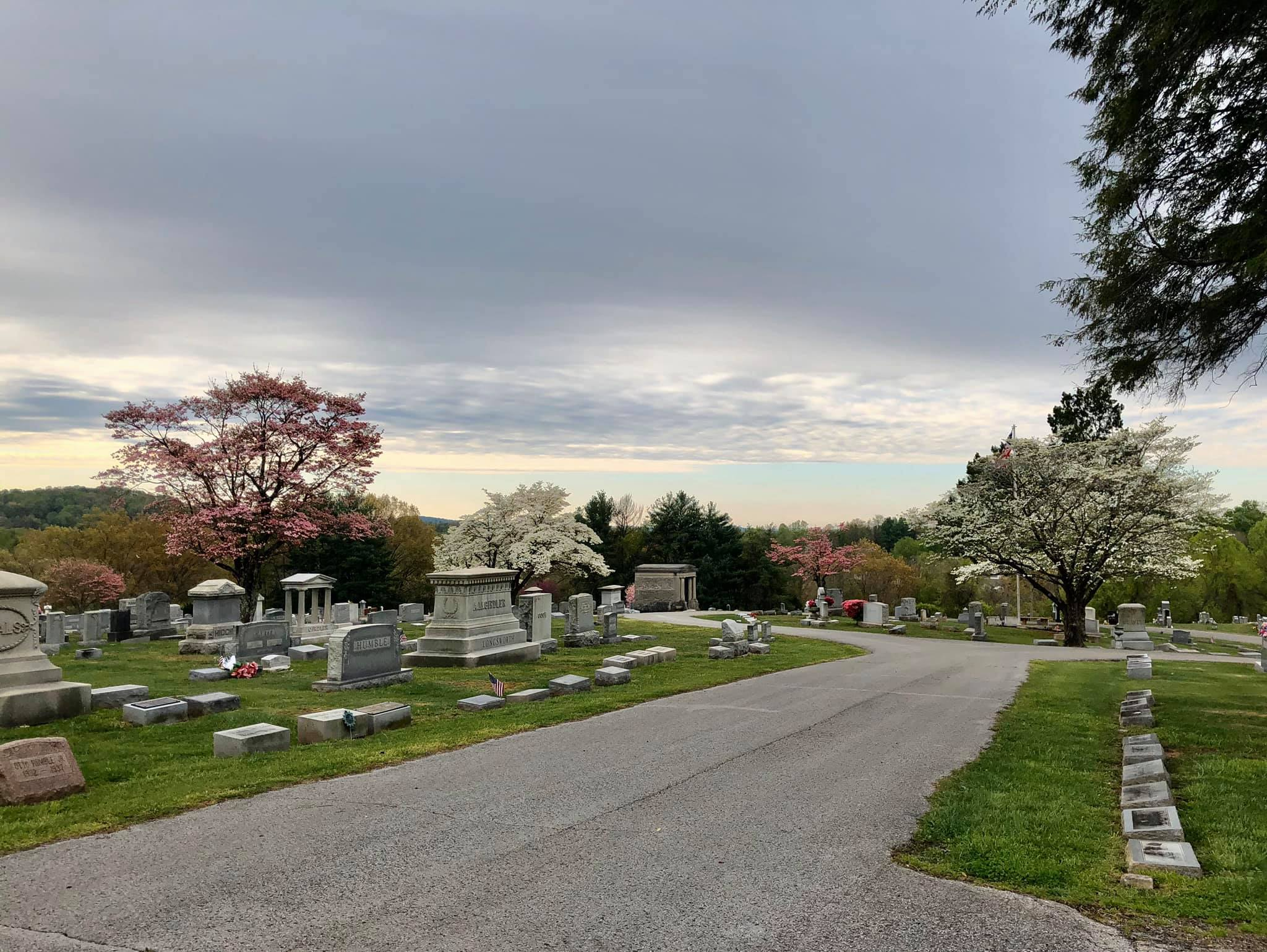 grounds of a cemetery with blooming trees