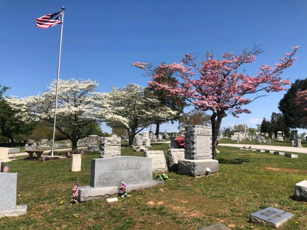 SET Cemetery 8