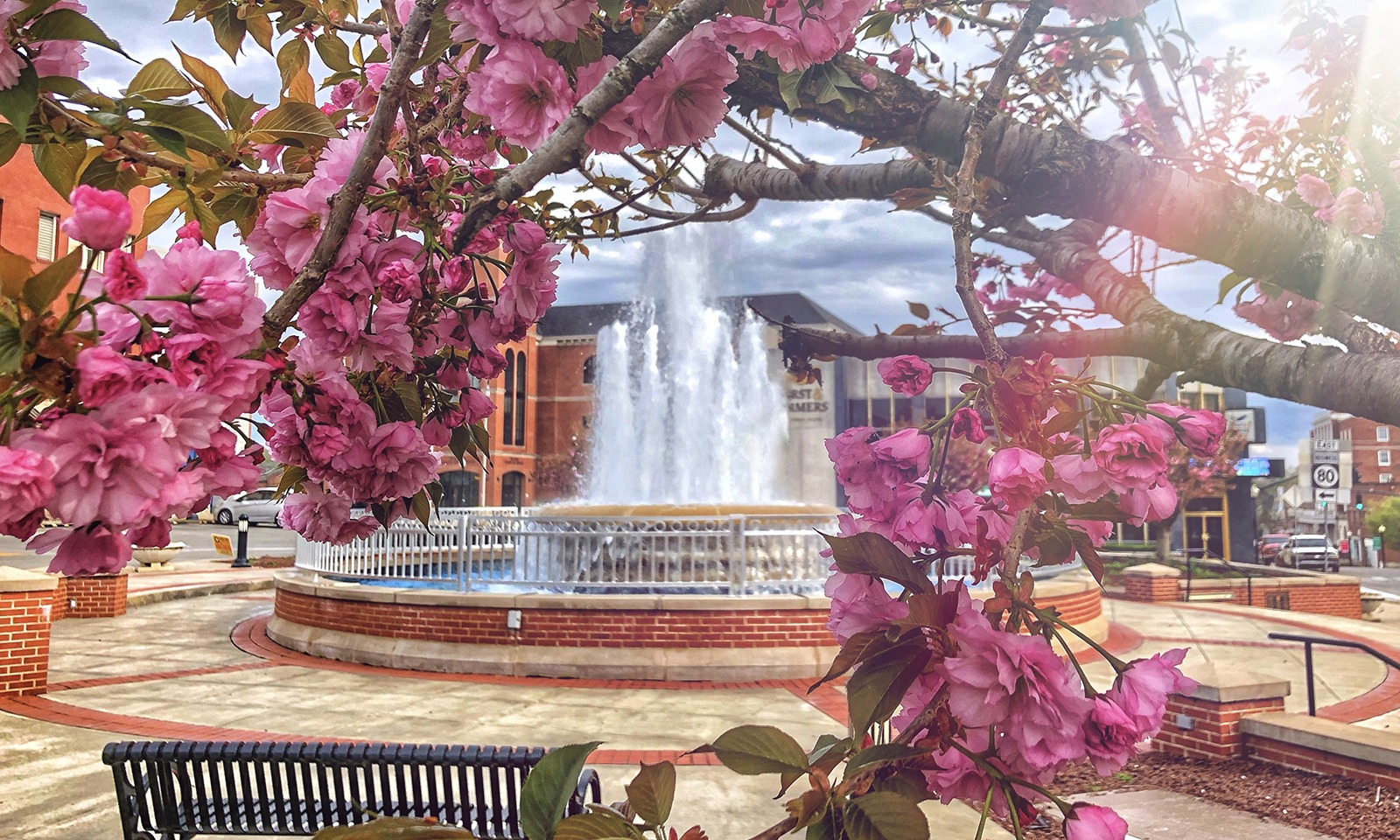 downtown fountain square with cherry trees blooming in foreground